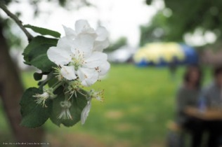 unter blühenden Bäumen